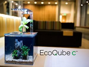 EcoQube Aquarium