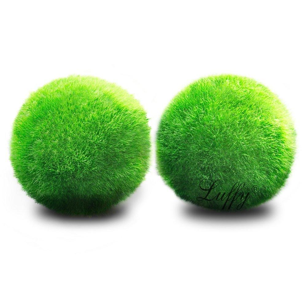 LUFFY Betta Balls Live Marimo Plants Natural Toys for Betta Fish ...