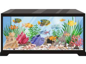 Setup an Aquarium