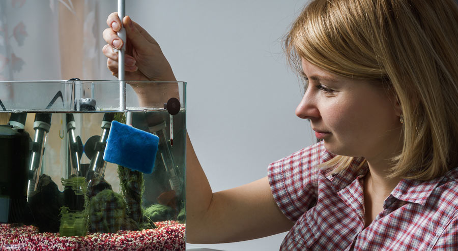 Home Aquarium Maintenance and Cleaning Tips